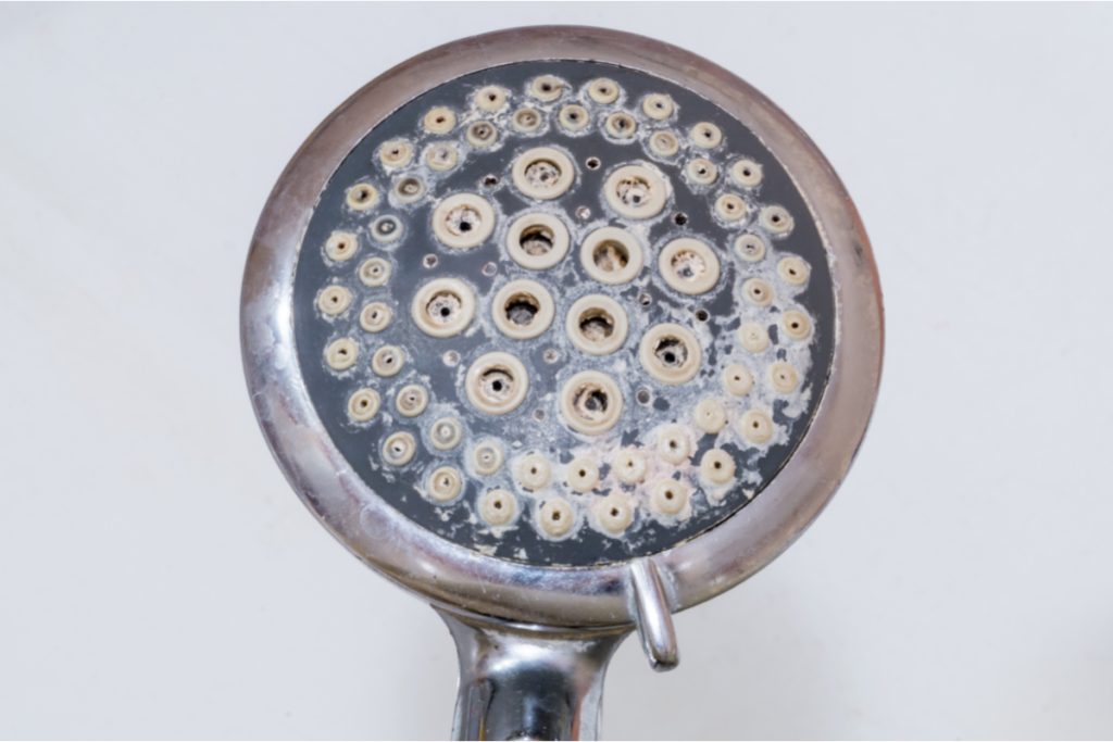 A showerhead covered in limescale